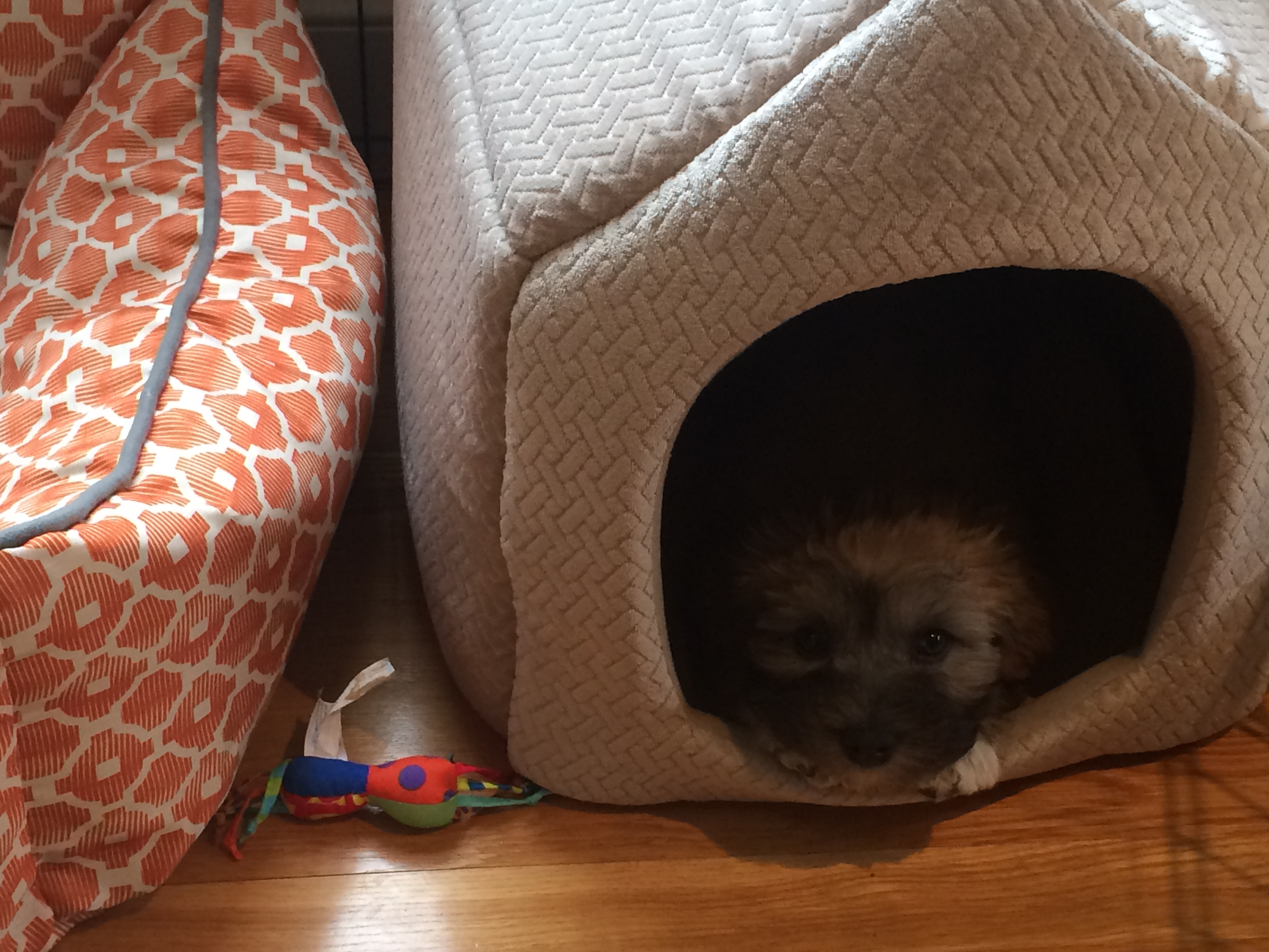 Wolfie and his new bed.